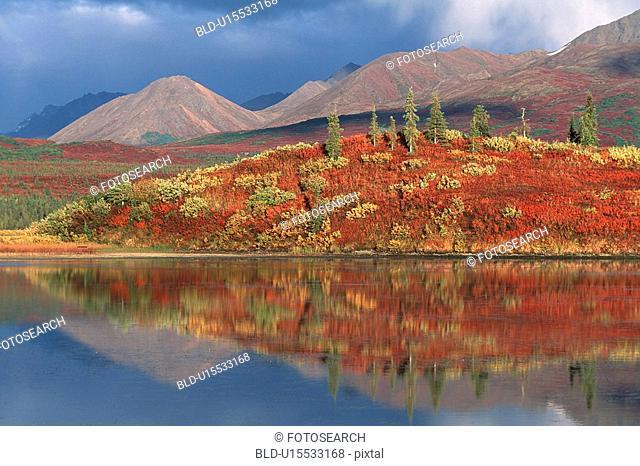 denali, autumn, conifer forest, Canada, beautiful, fall colors, alaska