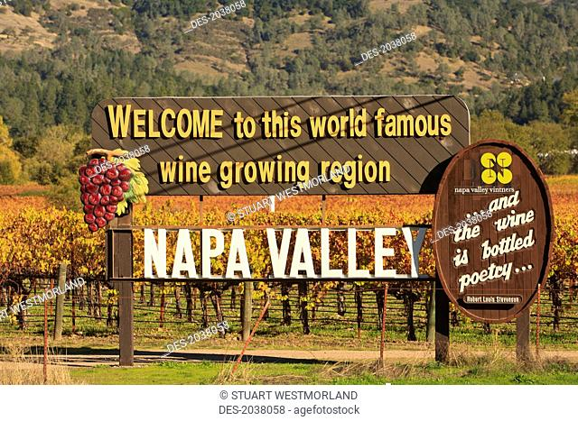 Napa Valley Vineyard In Autumn, California United States Of America