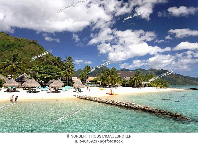 Beach with umbrellas and palm trees, Hilton Hotel, Moorea, Pacific Ocean, Society Islands, French Polynesia