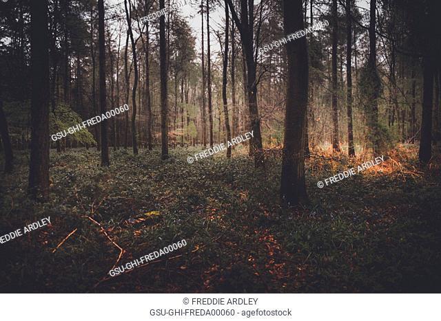 Dense Woodlands Landscape
