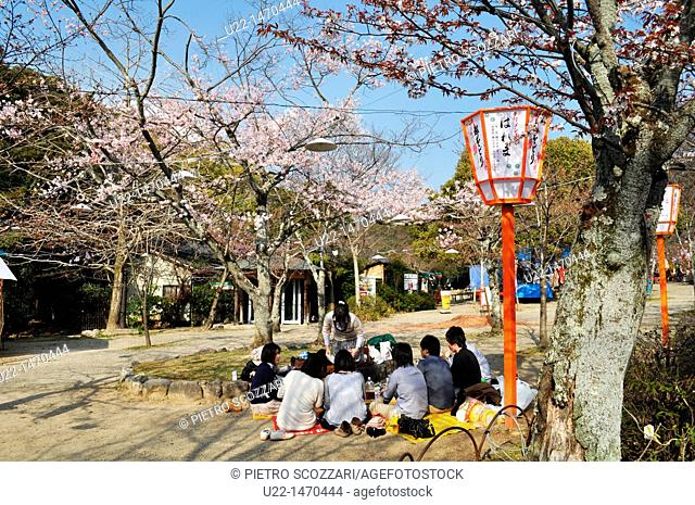 Kyoto (Japan): youngsters gathering for pick-nick by a blossoming cherry tree in Maruyama park, during Spring