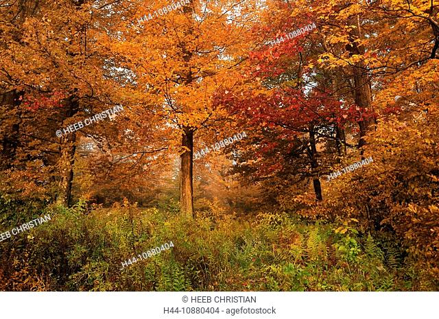 Colorful leaves, trees, Fall, colours, colors, at Lower Lake, Promised Land State Park, Pennsylvania, USA