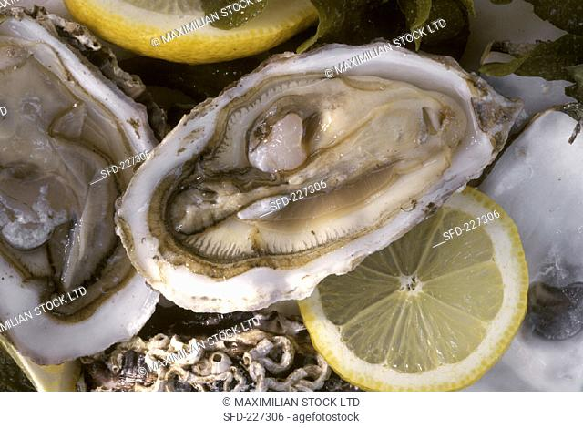 Opened oysters with slices of lemon