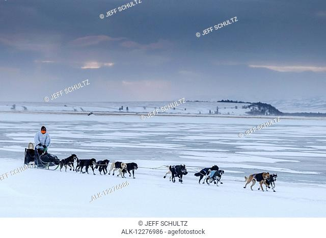 Martin Buser runs on the slough ice just before the Unalakleet checkpoint during Iditarod 2015