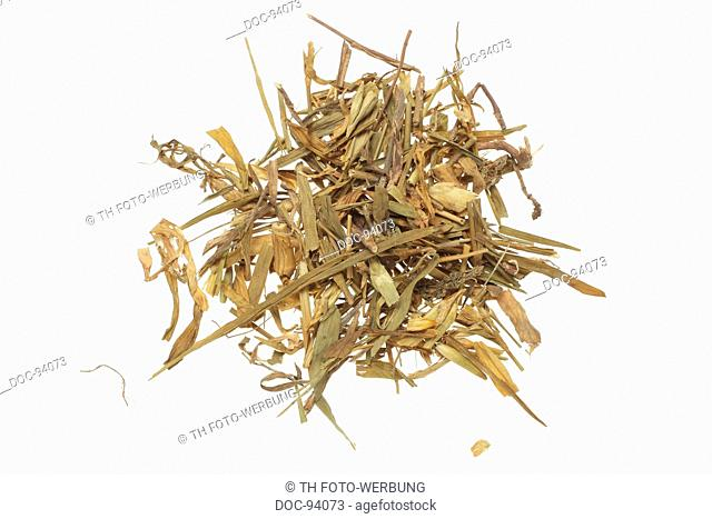 dried leaves of the medicinal plant Fringed Pink , Superb Pink , Dianthus superbus , Qu mai