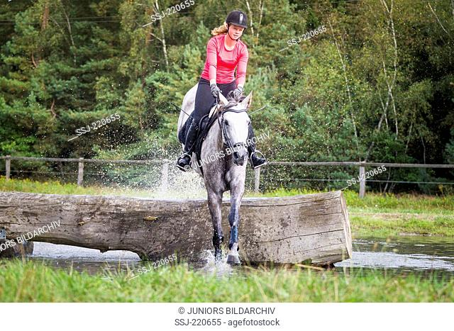 Hanoverian Horse. Rider on gray mare clearing an obstacle during a cross-country ride. Germany