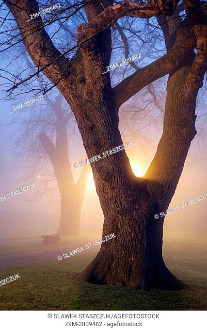 Foggy winter evening at Queen's Park in Brighton, East Sussex, England