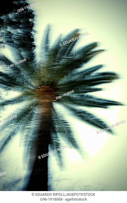 Blurred palm