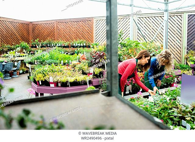 Two female florist checking plants