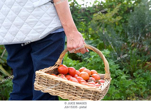 Woman with basket of tomatoes, mid section