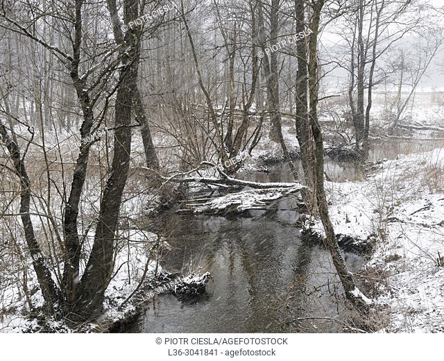 Poland. First snow. Stream