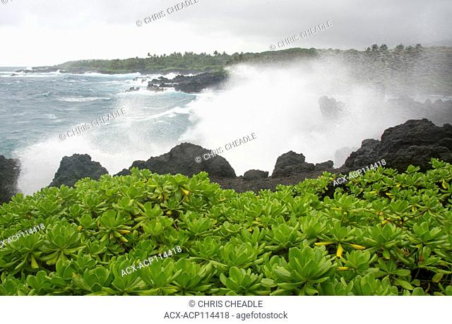 Waianapanapa State Park, located just off the Hana Highway on the outskirts of Hana, Maui, Hawaiian Islands, USA