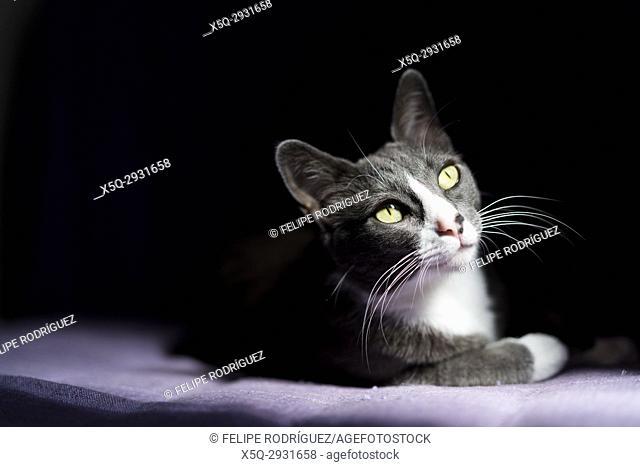 Kitty in chiaroscuro