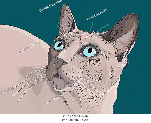 A close-up image of a cat