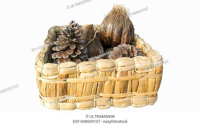 pine cones and pine cones in basket in basket