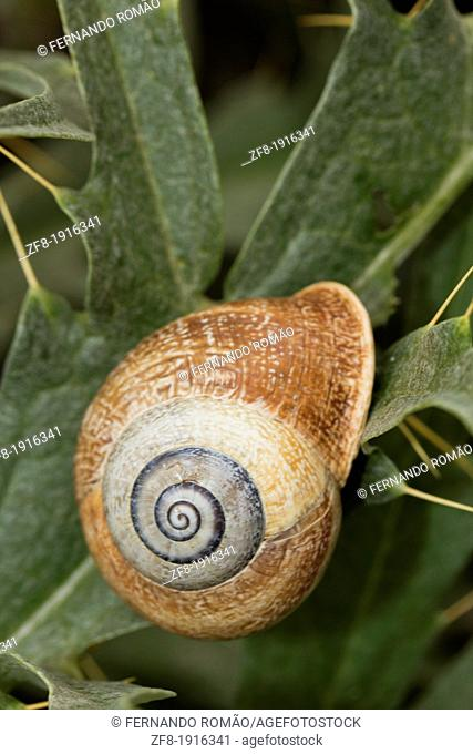 Snail resting on plant, at Serpa, Portugal