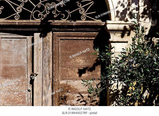 old cretan door with olive tree branch