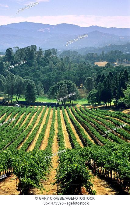 Vineyards near Lower Lake, Clear Lake, Lake County, California