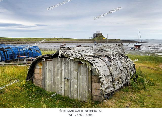 Weathered hull of shed made of overturned boat cut in half on Holy Island with Lindisfarner Castle ruins under renovation England UK