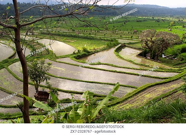 Rice Terraces. Tirta Gangga. Bali. Indonesia. Paddy fields surrounding the village of Tirta Gangga are the most beautiful to be found in Bali