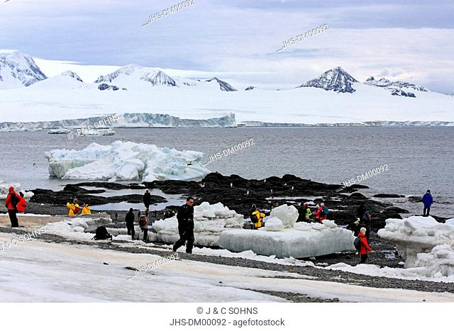 Penguin Colony, Devil Island, Antarctica, Weddell Sea, in summer