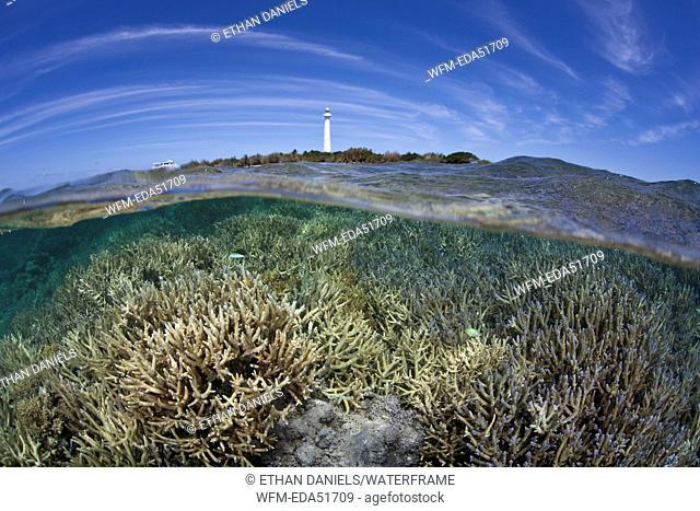 Reef-building Corals on Reef Top, Acropora sp., Noumea, Amedee Island, New Caledonia