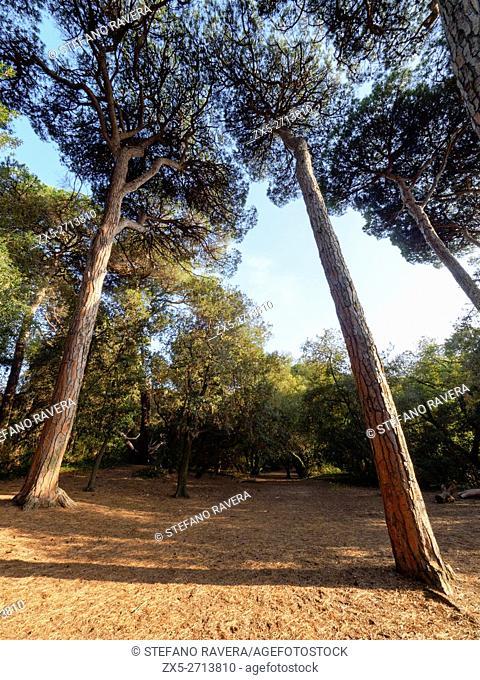 Pinewood of Ostia - Rome, Italy