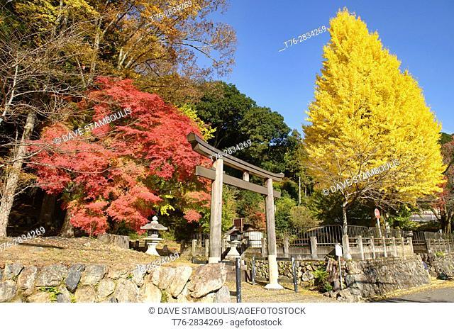 Maple and ginko tree in fautumn color at the Shizuhara Shrine, Kyoto, Japan