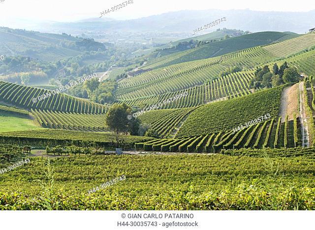 Italy, panorama of vineyards of Piedmont Langhe-Roero and Monferrato on the World Heritage List UNESCO. Panorama near Barbaresco