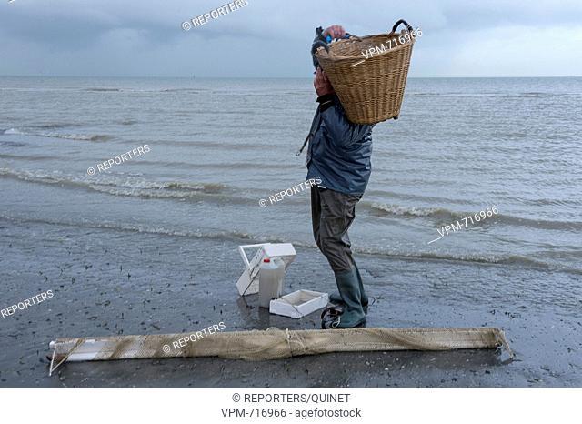 Bray-Dunes - 18 october 2016 Les pecheurs poussent leur filet en quete de crevettes grises. The fishermen push their net along the coast in search of brown...