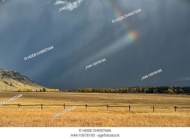 USA, United States, America, Wyoming, Rockies, Rocky Mountains, Grand Teton, National Park, wildlife, animal, pronghorn, herd, rainbow, thunderstorm, pasture