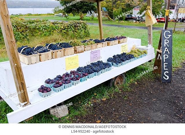 Grapes for sale at Roadside Stand in Finger Lakes Region New York