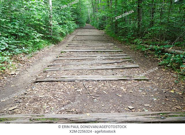 Railroad ties from the old East Branch & Lincoln Railroad along the Lincoln Woods Trail in Lincoln, New Hampshire USA. This was a logging Railroad which...