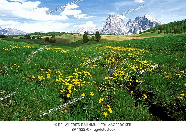 Langkofel and Plattkofel Mountains seen from the Seiser Alm alpine meadows, Dolomites, Alto Adige, Italy, Europe