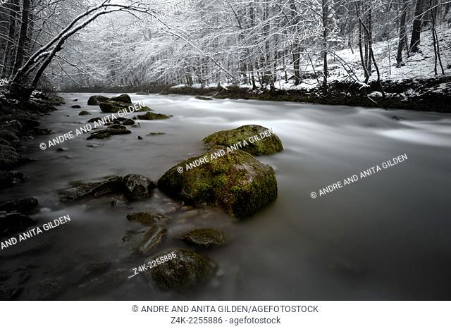 Mountainriver in winterly forest