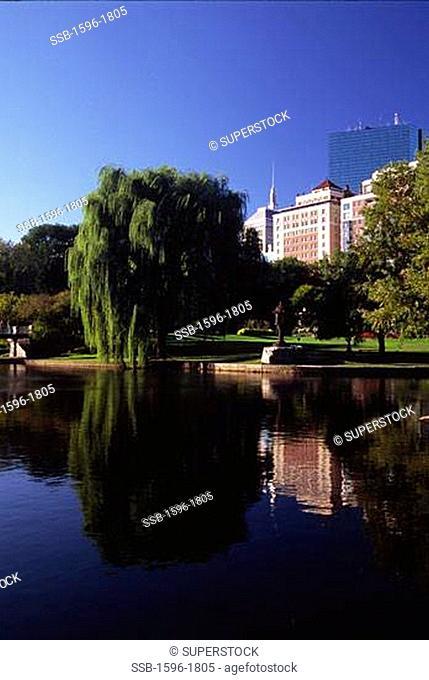 Reflection of trees in water, Boston Public Garden, Boston, Suffolk County, Massachusetts, USA