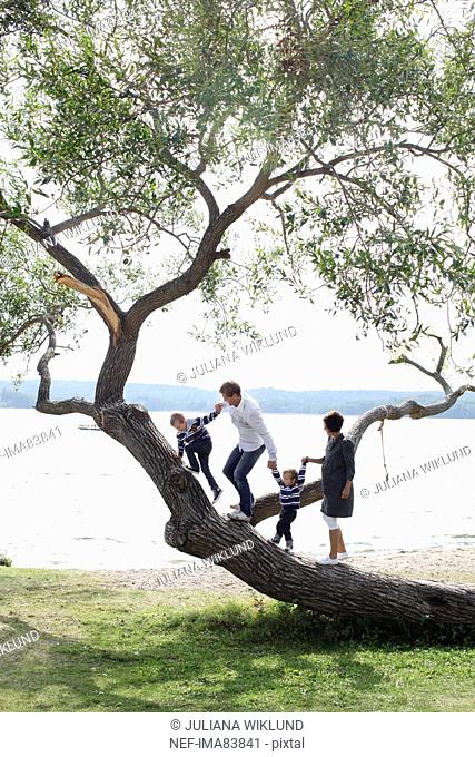 Family climbing tree trunk