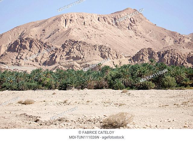 Tunisia - Chebika - Mountain oasis