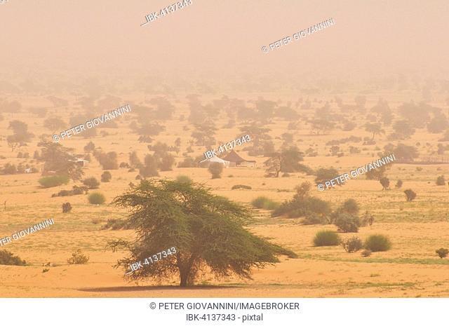 Nomad tents in a sandstorm, Adrar region, Sahara, Mauritania