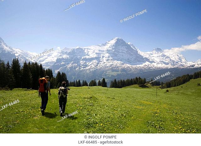 Two people hiking uphill at Bussalp 1800 m, view to Eiger North Face 3970 m, Grindelwald, Bernese Oberland highlands, Canton of Bern, Switzerland