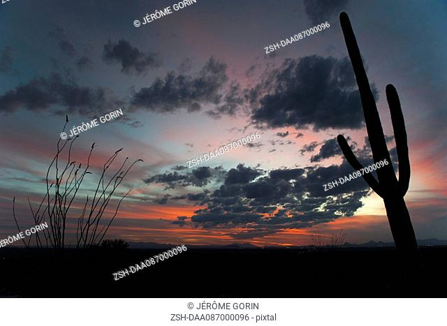 USA, Arizona, Saguaro National Park at twilight