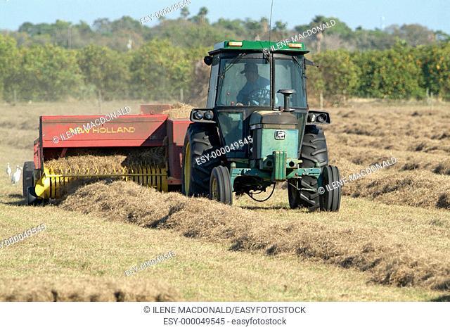 Farmer bailing hay in a field at Ruskin Florida
