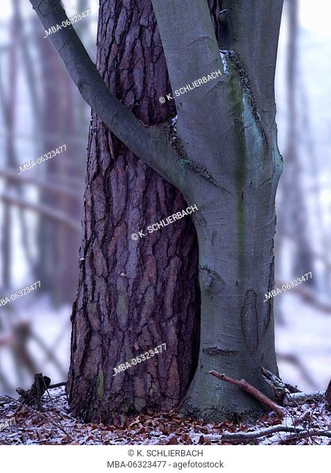 Germany, Mecklenburg-Western Pomerania, Müritz National Park, beech forest Serrahn, UNESCO World Heritage - natural site of European beech forests
