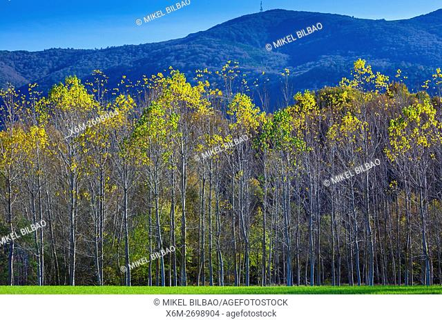 meadow and poplar grove. Maeztu. Alava, Basque Country, Spain, Europe
