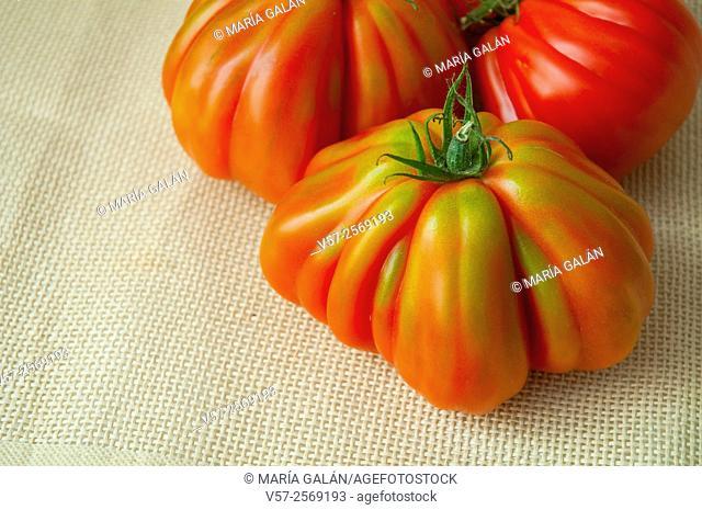 Three raf tomatoes. Close view