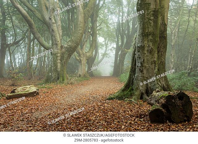 Misty autumn morning at Stanmer Park, East Sussex, England. South Downs National Park