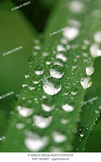 Droplets on leaf of grass