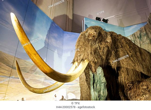 Wales, Cardiff, National Museum Cardiff, Woolly Mammoth