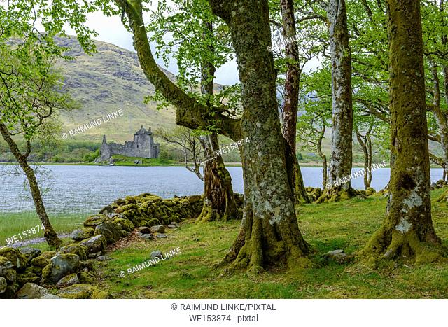 Small beech forest at the edge of a lake with Castle Kilchurn, Loch Awe, Scotland, United Kingdom
