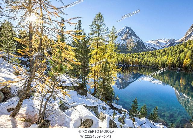 Colorful woods and snowy peaks reflected in Lake Saoseo, Poschiavo Valley, Canton of Grauunden, Swizterland, Europe